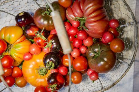 Popular The best Tomatensorten ideas on Pinterest Tomatenpflanzen Tomaten pflanzen and S en