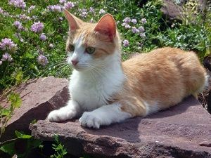 Declawing Cats Q A Positives Negatives And Alternatives Cats