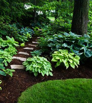 No Landscaping Experience These Tips Will Help Woodland Garden