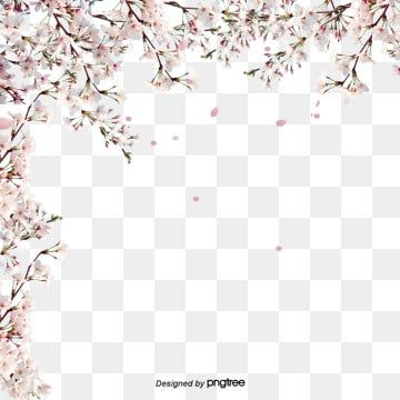 Pink Fresh Cherry Blossom Border Lovely Spring Cherry Blossoms Png Transparent Clipart Image And Psd File For Free Download Cherry Blossom Clip Art Cherry Blossom Flowers Flower Backgrounds