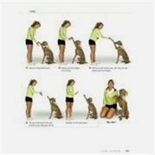 Dog Training Articles Therapy Dog Training Requirements Clicker