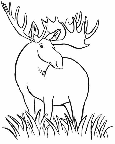 ausmalbilder elch  ausmalbilder tiere malvorlagen tiere