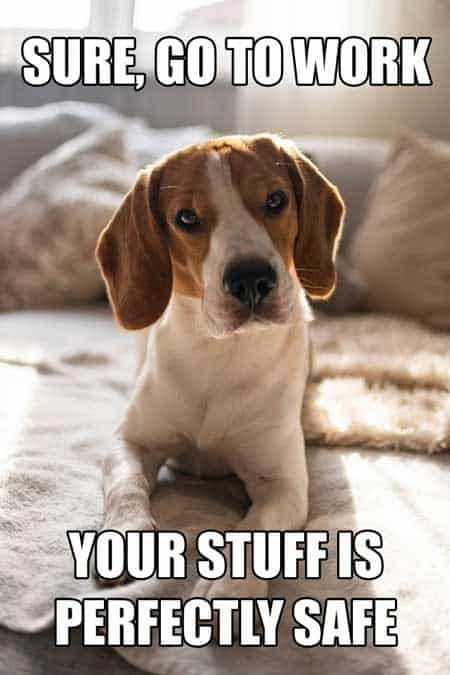 Discover More Information On Beagles Visit Our Internet Site