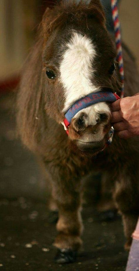 Thumbelina, the world's smallest horse, puts a smile on the face of everyone she meets.