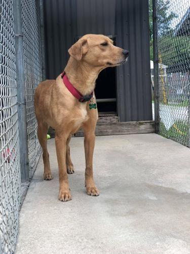 Adopt Khay On Adoption Labrador Retriever Dog Retriever Dog