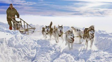 How Are Sled Dogs Trained Sled Dog Training Snow Dogs