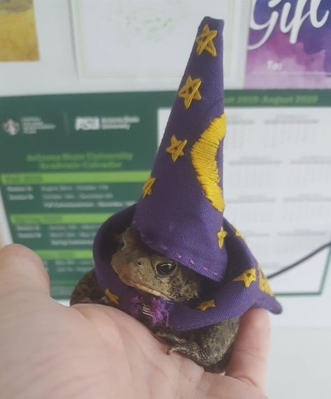finished toadbert's halloween costume little wizard -Not-flowers: finished toadbert's halloween costume little wizard - Video So many cute kittens videos compilation 2019 - 'I decided to enter the world of toad millinery and help the little guy out. Halloween Kostüm, Halloween Costumes, Wizard Costume, Pirate Costumes, Couple Halloween, Animal Memes, Funny Animals, Wild Animals, Les Reptiles