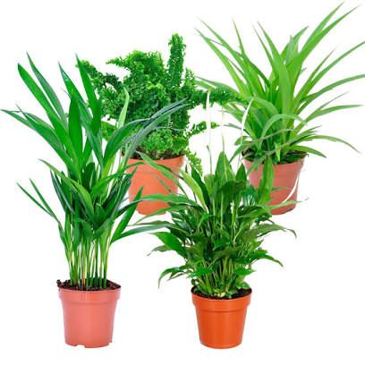 10 Non Toxic Plants For Your Nursery In 2020 Mosquito Plants Plants Best Indoor Trees