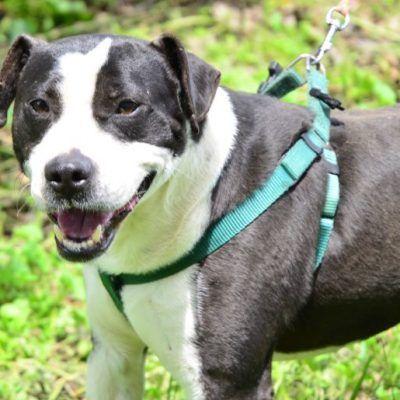 Rocky 3 Jahre 48 Cm Hunde Tiere