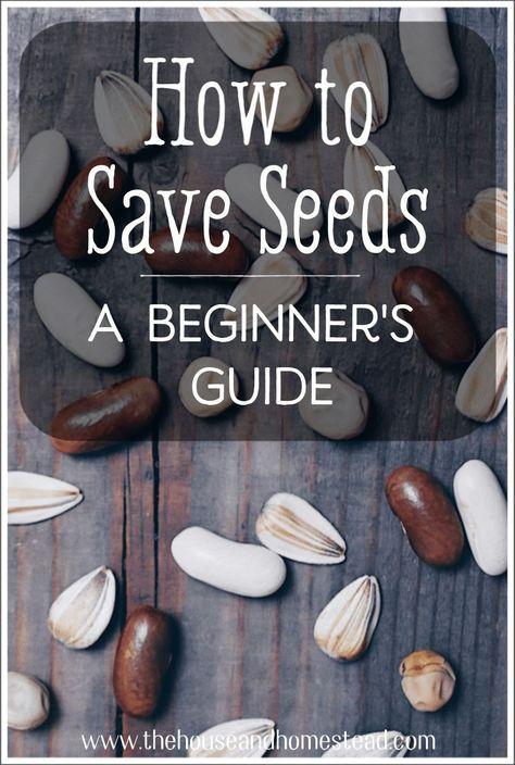 Saving Seeds From Vegetables, Growing Vegetables, Saving Tomato Seeds, Gardening Vegetables, Garden Cactus, Garden Seeds, Planting Seeds, Garden Plants, Garden Art