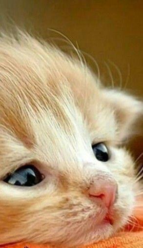 218 Best Animals Images In 2020 Animals Cute Animals Animals