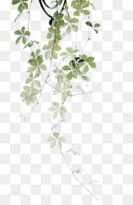 Leaves Png Leaves Transparent Clipart Free Download Eucalyptus Polyanthemos Royalty Free Watercolor Paintin Plant Drawing Plant Leaves Flower Garden Plants