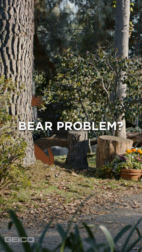 Saving with GEICO? It's smarter than your average bear!