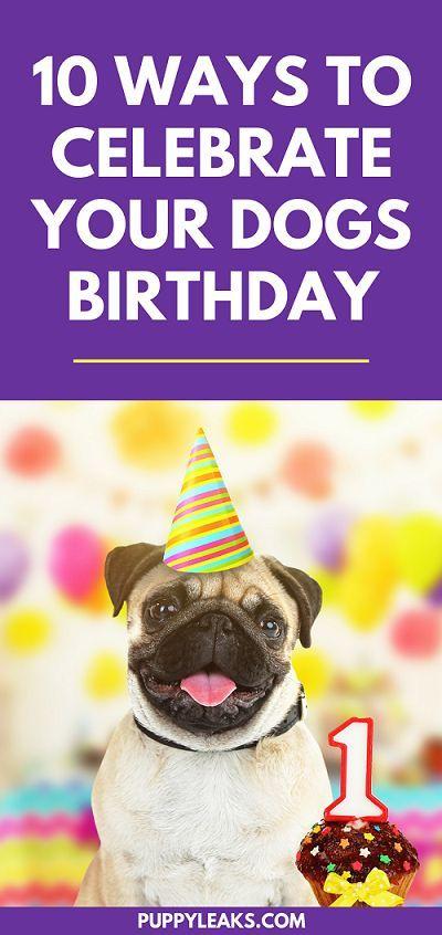 10 Fun Ways To Celebrate Your Dog S Birthday Dog Birthday Dog Birthday Party Dog Birthday Party Pets