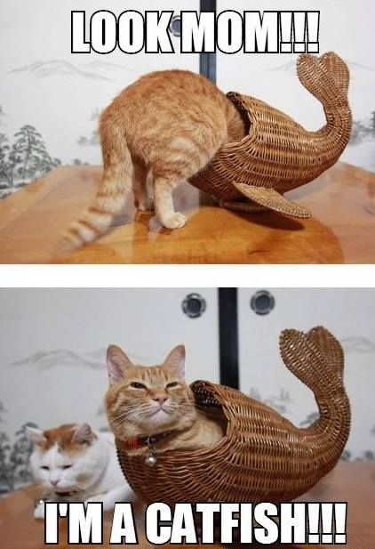 Funny cat pictures with captions, cats funny …For more funny pictures and hilarious humor visit www.bestfunnyjokes4u.com