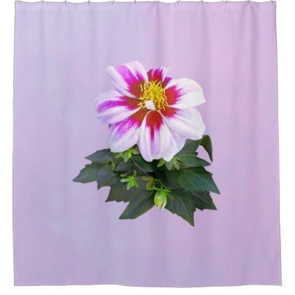 Two Toned Pink Dahlia Shower Curtain Zazzle Com Floral Shower