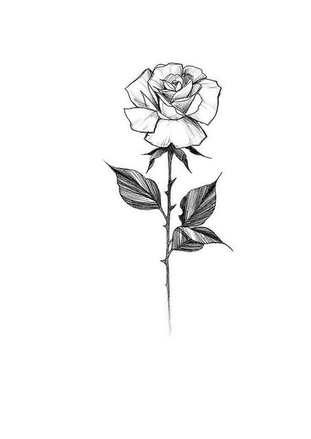 Photo Rose Sketch Floral Tattoo Design Tattoo Design Drawings