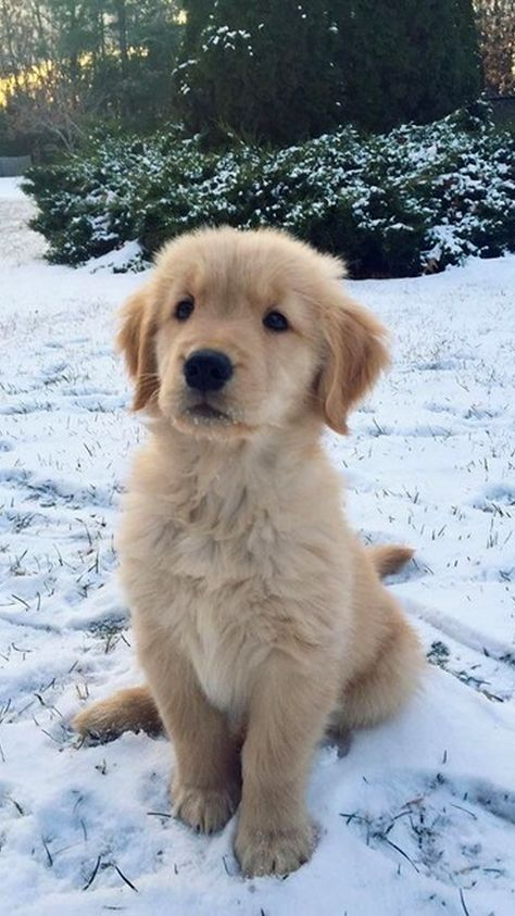 Dogs Wallpaper Doggies 44 Ideas For 2019 Really Cute Puppies, Cute Baby Dogs, Super Cute Puppies, Baby Animals Super Cute, Cute Funny Dogs, Cute Little Puppies, Cute Dogs And Puppies, Cute Little Animals, Doggies