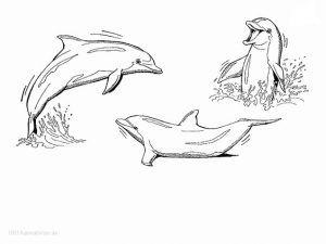 Ausmalbilder Delfine Zum Ausdrucken Best Charmant Malbuch Delfin Ideen Ideen Farben Blsbooks Arte Del Delfin Dibujos Delfines