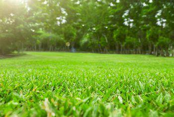 The Best Nitrogen Fertilizers For St Augustine Lawns St