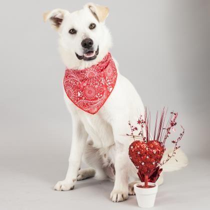 Dogs Dog Adoption