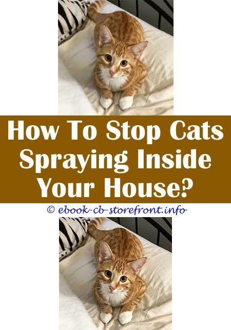 Fascinating Cool Tips Cat Spraying Feet Forum Cat Allergy Spray Petco Stink Bug Sprayed My Cat Cat Spraying Feet Forum How Do You Stop Cats Sp Aerosol Sensible