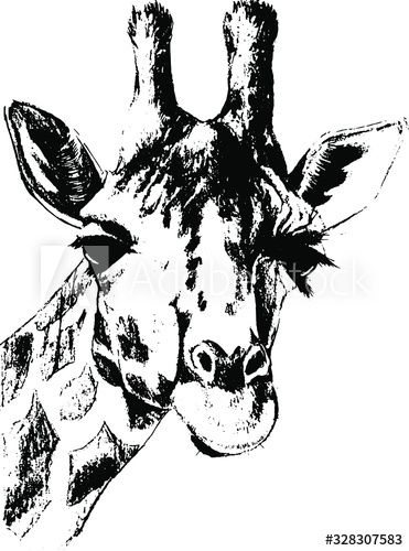 Hand Drawn Giraffe Vector Isolated On A Transparent Background Affiliate Giraffe Drawn Hand Vector In 2020 How To Draw Hands Transparent Background Giraffe