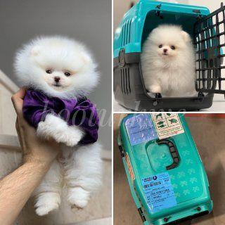 كلاب للبيع في باقي دول العالم دميتي الجميلة لديها بعض القمامة الجميلة إنهم 4 أطفال رائعون بشكل لا يصدق الآن 11 Plastic Laundry Basket Laundry Basket Hamster