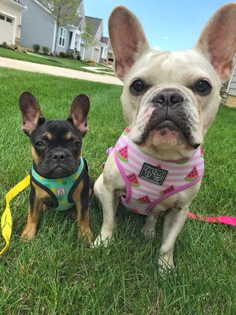 Pet Insurance Helps Pet Parents W Unexpected Vet Costs From Accidents Illnesses In Some Cases Wellness Care See How Embrace H Dog Care Cat Illnesses Pets
