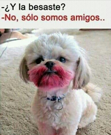 Solo Amigos Funny Spanish Memes Memes Pinterest Memes