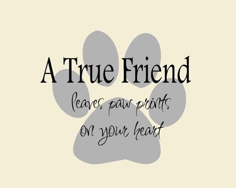 A True Friend... Dog Quote on Paw Print Vinyl Wall Decal, Dog Bumper Sticker, Dog Wall Decal   Dog Lovers Galore