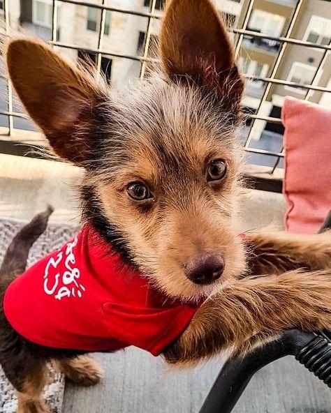 "Fluffy on Instagram: ""Kisses 25 Cents 💋 . . . #doggosbeingdoggos #doggosdoingthings #doggosofinstagram #puppiesofinsta #puppiesofinstagram #doglifestyle…"""