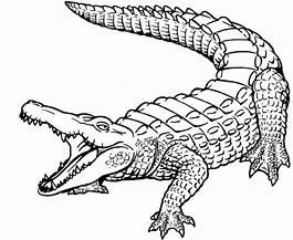 American Crocodile Coloring Page Bing Images Coloring Pages