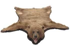 Brown Bear Skin Rug With Head And Claws
