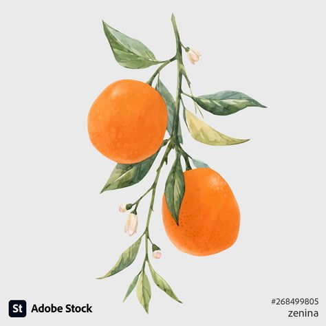 Watercolor-style vector illustration of citrus fruits