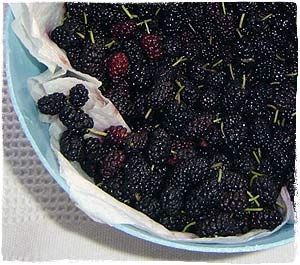 How to freeze mulberries...just discovered that the tree in the backyard is a mulberry tree and it is dropping fruit all over the place...need to use them somehow :)