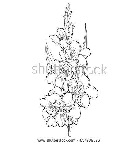 Image Result For Gladiolus Drawing Gladiolus Flower Tattoos Gladiolus Tattoo Gladiolus Flower