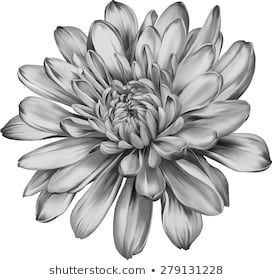 Chrysanthemum Flower Outline for Jacob's tattoo Tattoos Skull, Black Tattoos, Body Art Tattoos, Sleeve Tattoos, Tatoos, Mandala Flower, Chrysanthemum Flower, Chrysanthemum Drawing, Cactus Flower
