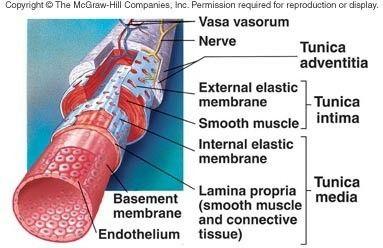 Pin On Arteries Veins