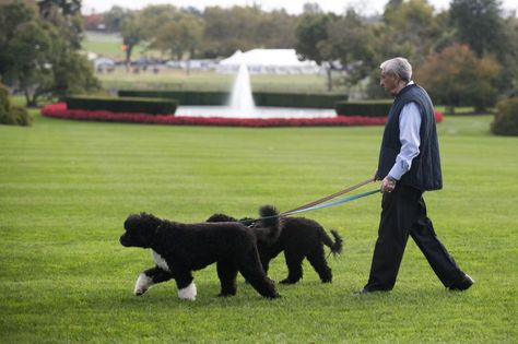 A White House Staffer Walks Bo L And Sunny The Obama Family