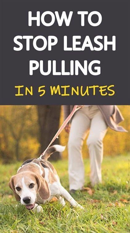 Dog Training Dominance Dog Training Older Dogs Dog Training