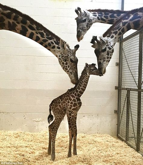 The baby is not yet named and has not made its public debut at the zoo. It will…