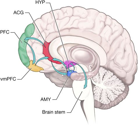 Inhibiting Fear and Aggression:    Ventromedial Pre-Frontal Cortex, Pre-Frontal Cortex, Anterior Cingulate Geniculate, Hypothalamus, Amygdala, and Brainstem