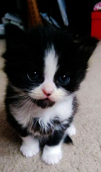 Can You See Us Now Kittens Cutest Cats And Kittens Cute Animals