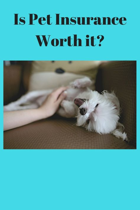 Is Pet Insurance Worth It Pet Insurance Reviews Pet Insurance