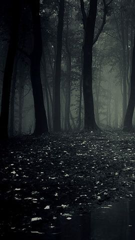 Phone Wallpaper Dark Forest In 2020 Dark Phone Wallpapers Forest Wallpaper Forest Background