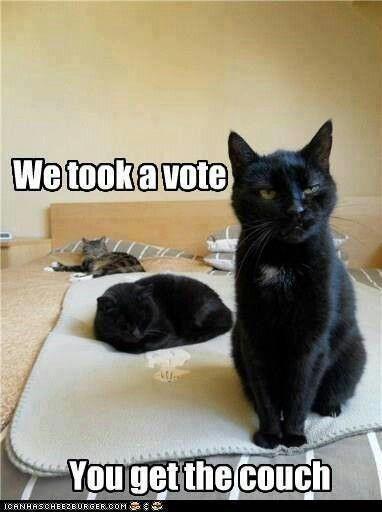 Black Cats Appreciation Pics And Vids 40 Cat Memes Funny Cute Cats Pet Cat Photos Funny Animal Memes