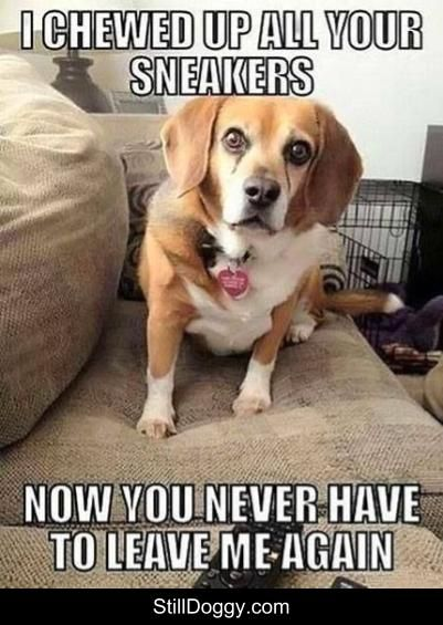 Uh Oh Dog Memes Dog Memes Hilarious Dog Memes Funny Dog Memes Humor Funny Dog Memes Beagle Funny Funny Dog Pictures