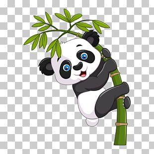 Ilustracion De Dibujos Animados De Panda Gigante Panda Panda Gigante En Un Arbol De Bambu Png Clipart Bear Cartoon Giant Panda Bear Panda Bear