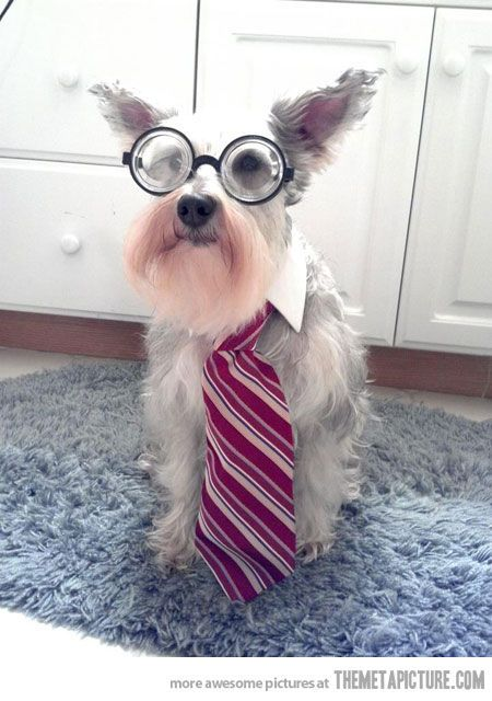 https://i.pinimg.com/474x/53/a2/38/53a238441d2b342312879d09bfd37e8a--funny-dog-pics-professor.jpg